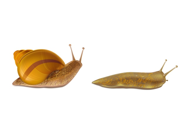 Creeping burgundy or roman snail and red slug Free Vector