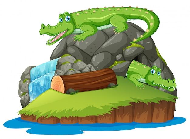 Crocodile on the isolated island Premium Vector