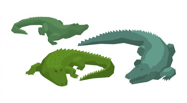Crocodile vector cartoon crocodilian character of green alligator carnivore Premium Vector