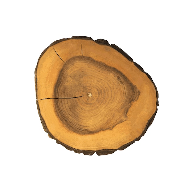 Cross section of a tree Premium Vector