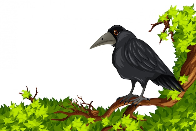 Crow standing on branch Free Vector