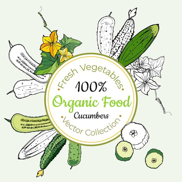 Cucumber vegetable groceries vintage label Premium Vector