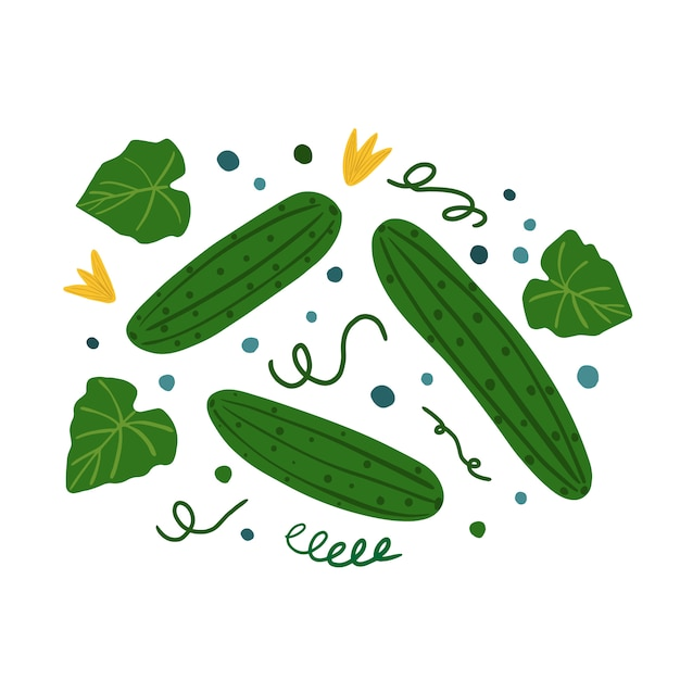 Cucumbers and leaves. hand draw vegetable print. Premium Vector