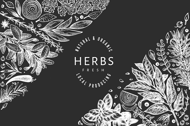 Culinary herbs banner template. hand drawn vintage botanical illustration on chalk board. engraved style. vintage food background. Premium Vector