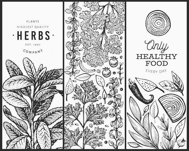 Culinary herbs banner template. hand drawn vintage botanical illustration. engraved style. vintage food background. Premium Vector