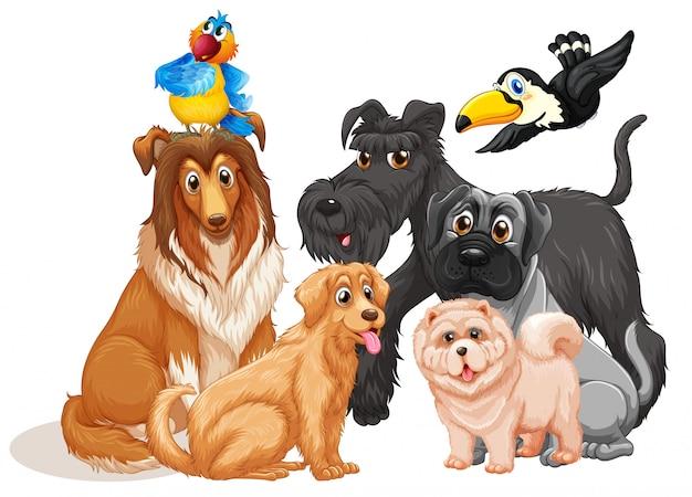 白い背景の上のかわいい動物犬グループ 無料ベクター