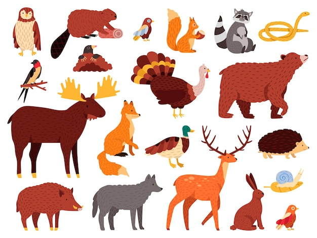 Cute animals. cartoon forest animals, bear raccoon fox and cute owl, hand drawn mammals and birds, fall wood fauna  illustration icons set. bear and owl, wild fox and rabbit Premium Vector