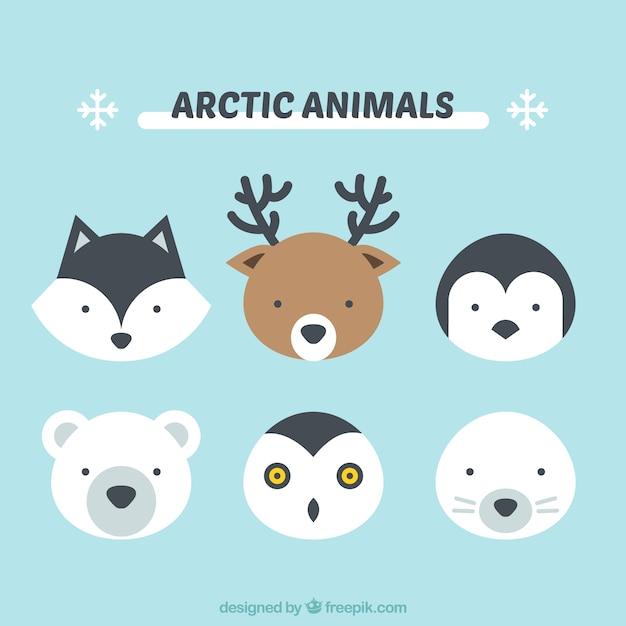 cute arctic animals vector premium download