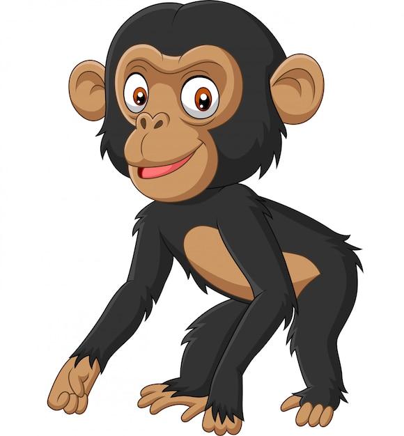 Cute baby chimpanzee cartoon on white background Premium Vector