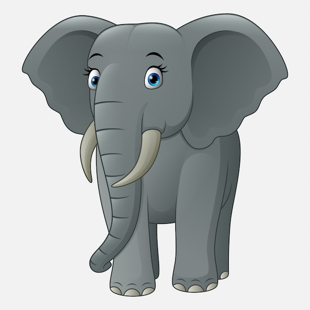 Cute baby elephant isolated on white background Premium Vector