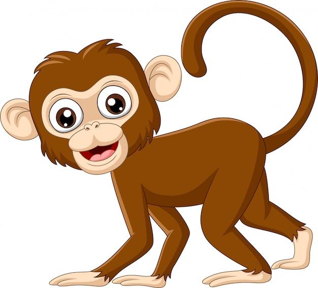 かわいい赤ちゃん猿 Premiumベクター