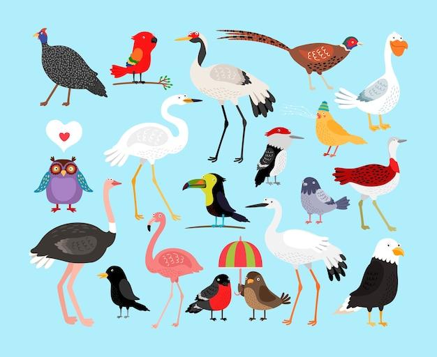 Insieme dell'illustrazione degli uccelli svegli Vettore gratuito