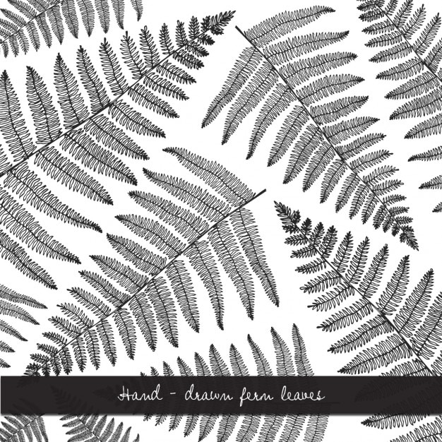 Cute Black And White Floral Background Vector Free Download
