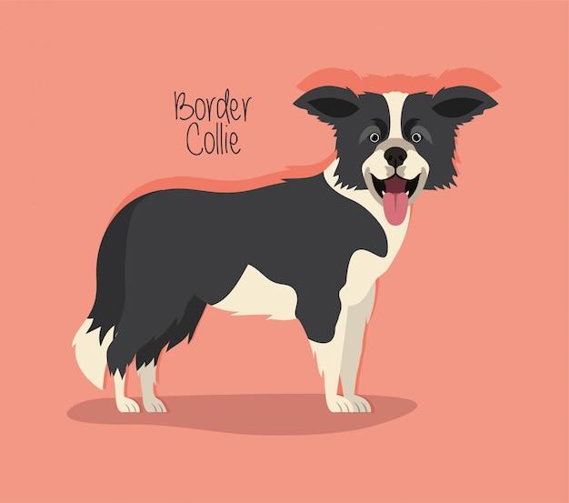 Cute border collie dog pet character Premium Vector