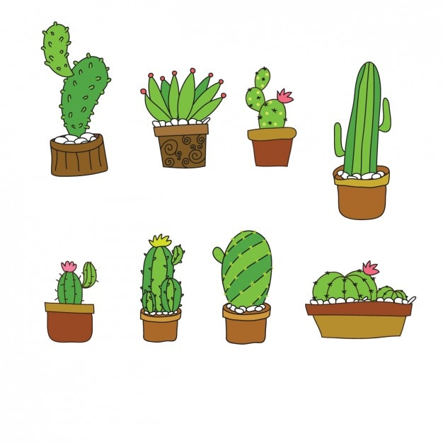 cute cactus collection in flat design_1096 18
