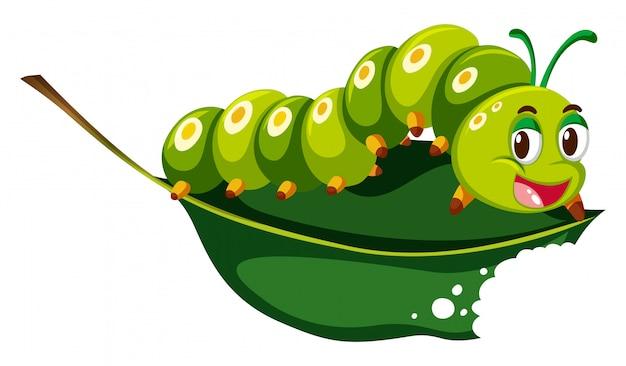 Cute caterpillar chewing green leaf Premium Vector