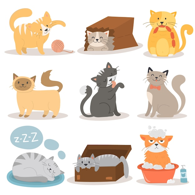 Cute cats character different pose vector set. Premium Vector