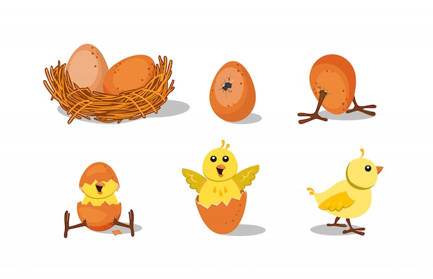 Cute chick hatching set Free Vector
