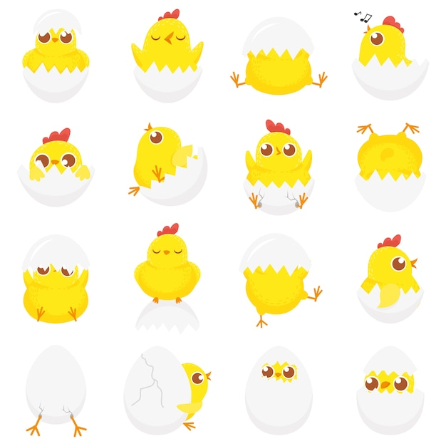 Cute chicken in egg, easter baby chick, newborn chickens in eggshell and farm kids chicks isolated