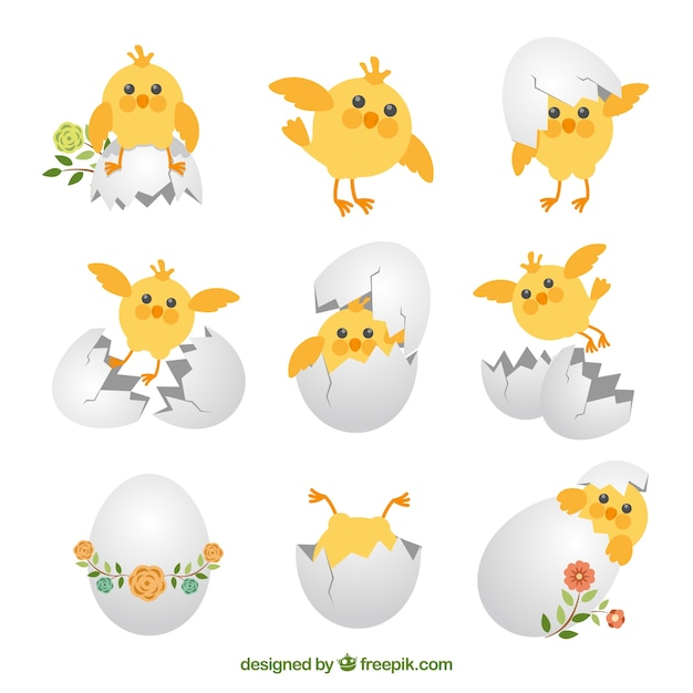 Cute chicks collection Free Vector