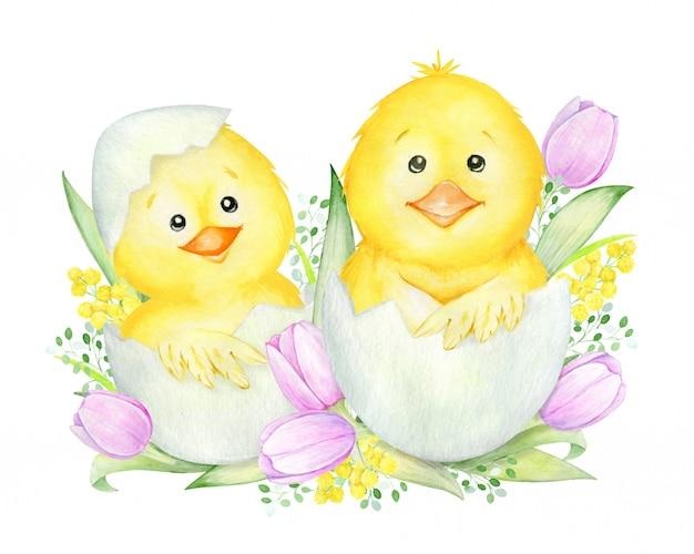 卵からhatch化したかわいい雛。水彩のコンセプト Premiumベクター