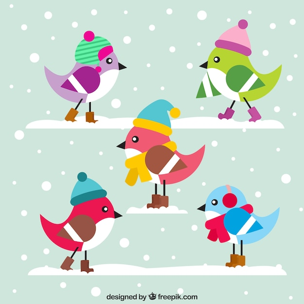 Cute colorful birds with hat