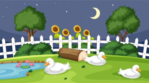 Anatra sveglia che dorme sull'erba Vettore gratuito