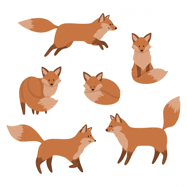 Cute foxes are sleeping, sitting and jumping. set Premium Vector