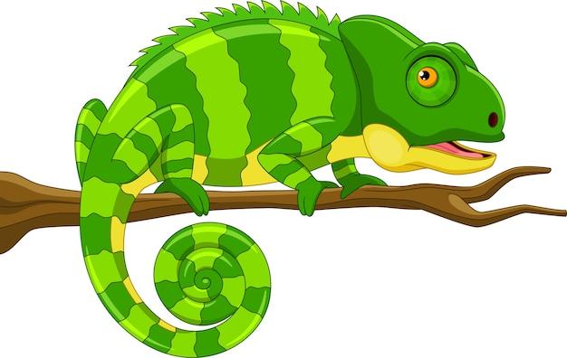 枝漫画のかわいい緑のカメレオン Premiumベクター