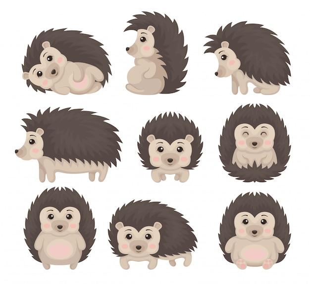 様々なポーズでかわいいハリネズミセット、白い背景の素敵なとげのある動物漫画のキャラクターイラスト Premiumベクター