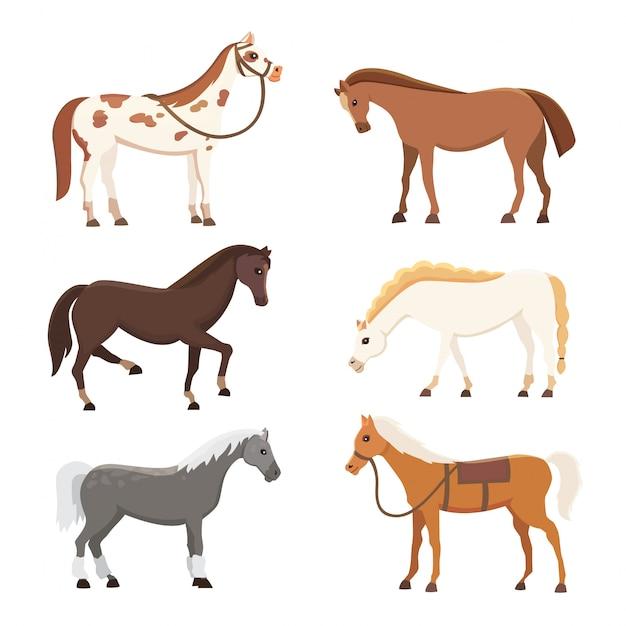 Милые лошади в различных позах векторный дизайн. мультфильм фермы диких изолированных вектор шланги. коллекция животных лошади стоя. другой силуэт Premium векторы