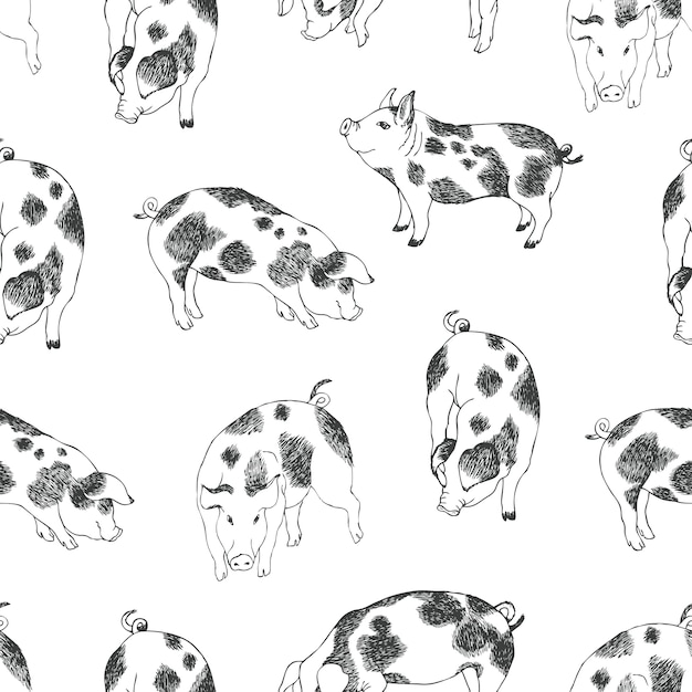 Cute little pigs background Free Vector
