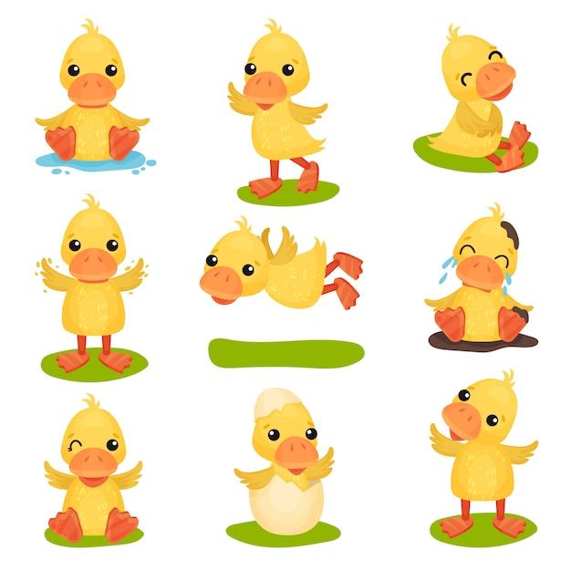 Милый маленький желтый утенок набор символов, цыпленок утка в разных позах и ситуациях иллюстрации на белом фоне Premium векторы