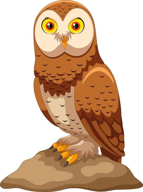 Premium Vector | Cute owl cartoon