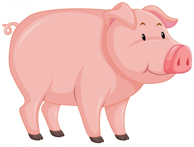 Cute pig with pink skin on white Free Vector