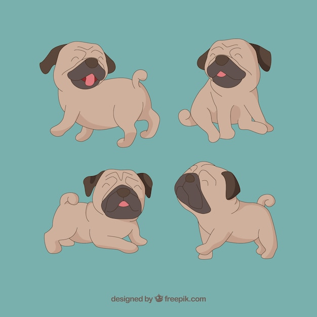 Cute pug dogs in different poses