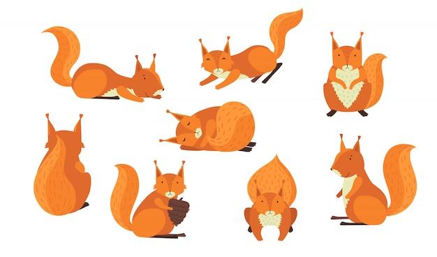 Simpatico set di scoiattoli pelosi rossi Vettore gratuito