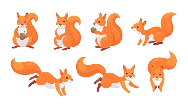 Cute red squirrel set Free Vector