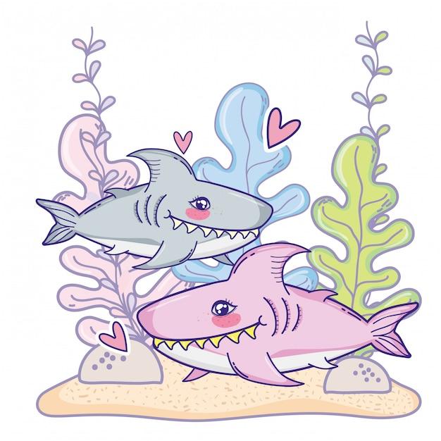 Cute shark couple animal with seaweed plants Premium Vector