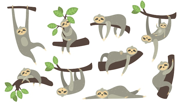 Милый сонный ленивец на ветке плоский набор иконок. мультипликационный персонаж маленького ленивца, висящего, спящего, лежащего или играющего с ребенком, изолировал собрание векторных иллюстраций. Бесплатные векторы