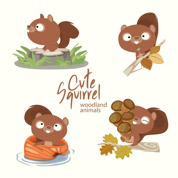 Cute squirrel woodland animals Premium Vector
