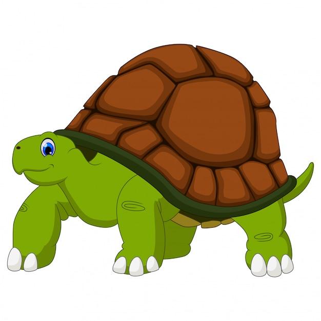 Cute turtle cartoon on white Premium Vector