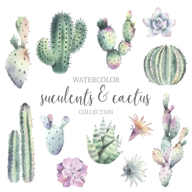 Cute watercolor cactus & suculent collection Free Vector