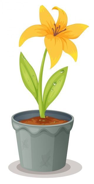Daffodil in a pot Free Vector