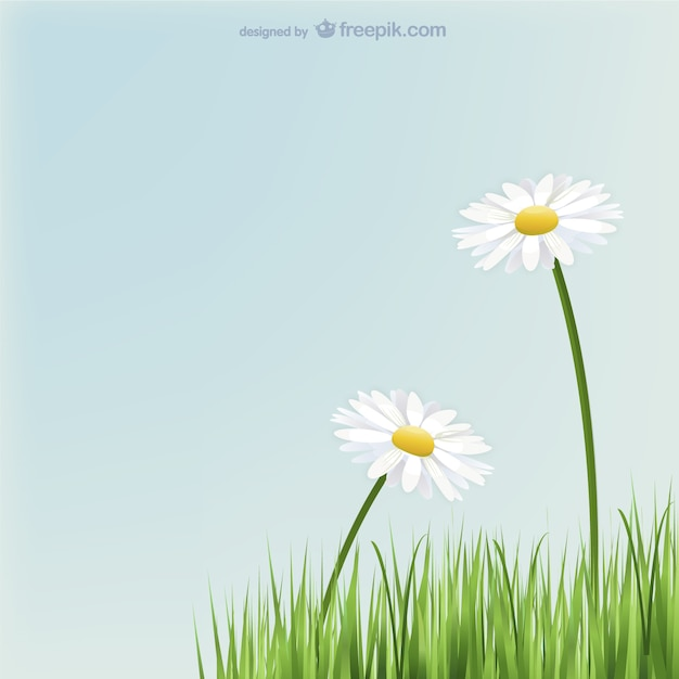 daisy flowers vectors, photos and psd files  free download, Beautiful flower