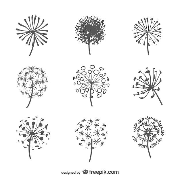 Gallery For gt Dandelion Seed Vector