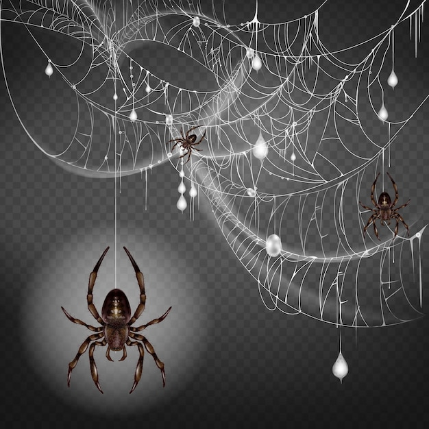 Dangerous, poisonous big and small spiders hanging on thin web string Free Vector