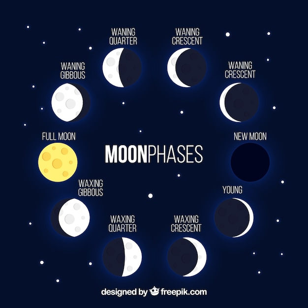 Dark blue background with shiny moon phases Free Vector