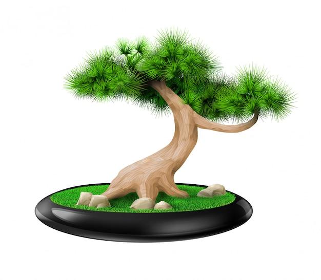 鍋に装飾的な盆栽の木の松 Premiumベクター