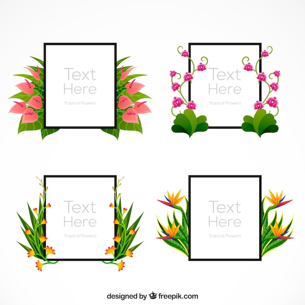 Decorative frames pack with exotic\ flowers